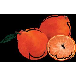 Tangelo Marmalade